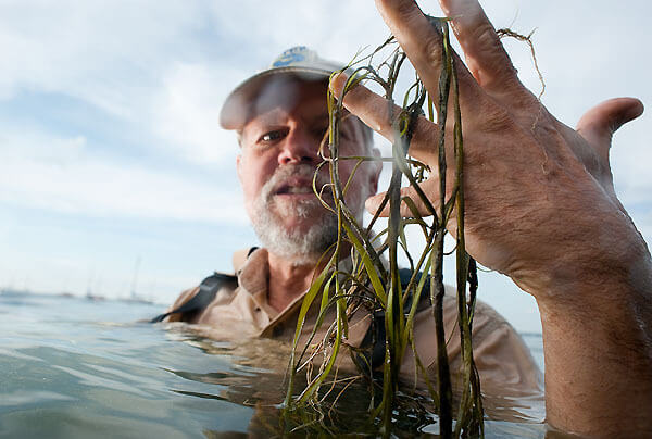 Holding strands of loose native pondweed that floated to the surface, Center for Limnology Director Steve Carpenter is pictured in Lake Mendota just offshore of the UW–Madison campus in 2009.