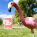 Donors who pledged $250 or more will receive a Fill the Hill flamingo in the mail.