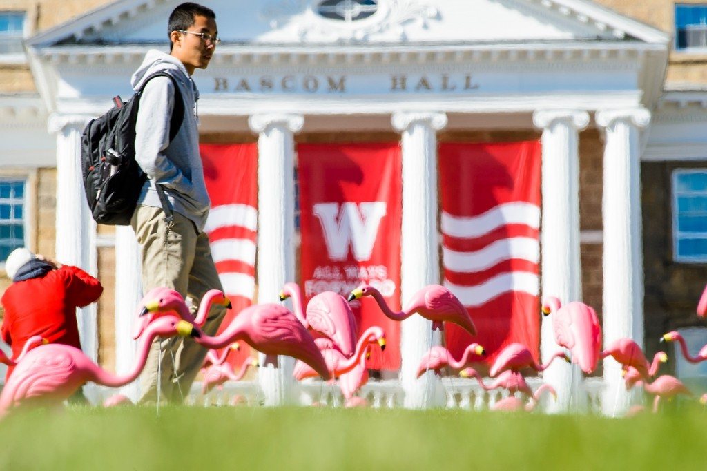 As donations pour in for the UW's Annual Campaign, plastic pink flamingos — one of the most iconic and adored campus symbols — pop up on Bascom Hill in October.
