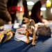 A toy dinosaur stands next to replicas of a Spinosaurus tooth on display and available for purchase -- along with many gems and minerals -- during the Friends of the Geology Museum Holiday Sale at the University of Wisconsin-Madison on Dec. 4, 2015. The tooth replica is from a carnivorous specimen estimated to be approximately 100 million-years-old and found in Morocco. (Photo by Jeff Miller/UW-Madison)