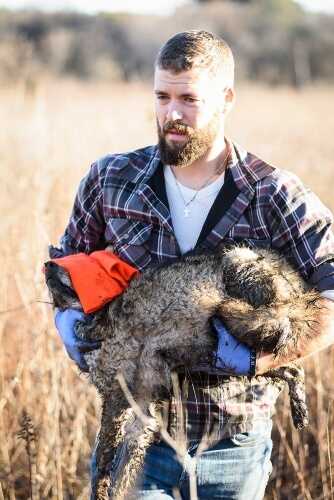 Graduate student Marcus Mueller carries the coyote to be examined by researchers.