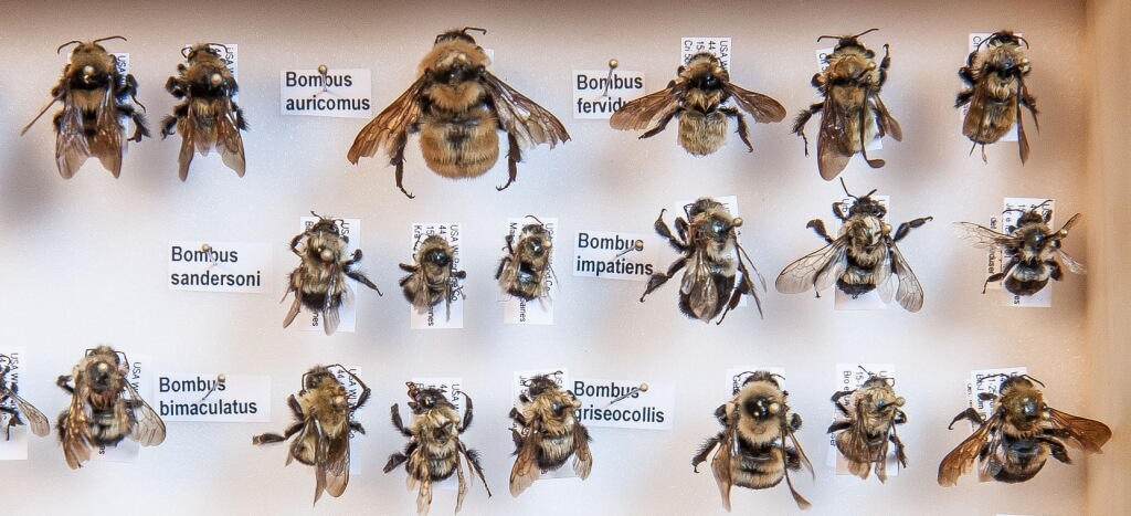 A collection of some of the many insects known to be plant pollinators in the Department of Entomology.