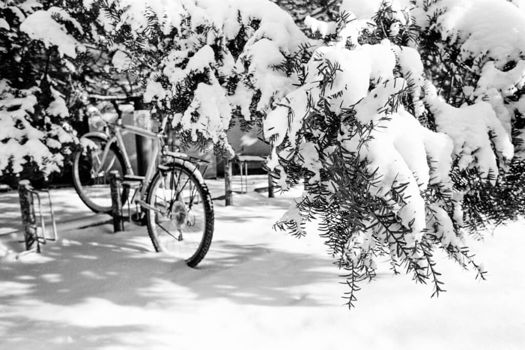 A fresh snowfall blankets trees and a bicycle locked to a bike rack on campus in January 1991.