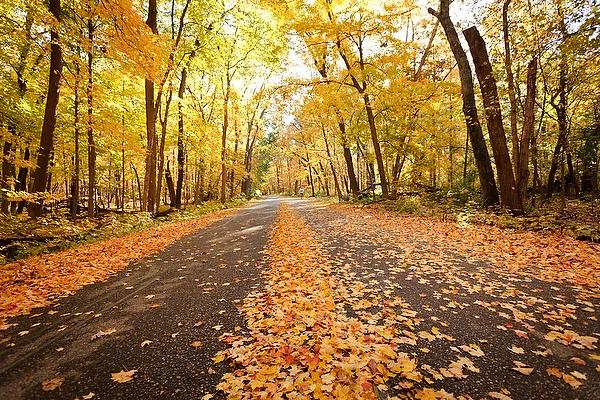 Fallen leaves cover Arboretum Drive in Gallistel Woods at the Arboretum during autumn 2012.