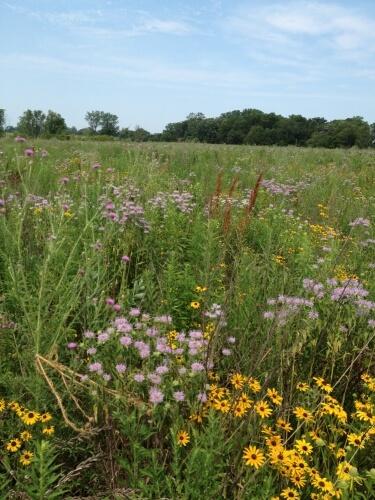 A florally diverse grassland field.