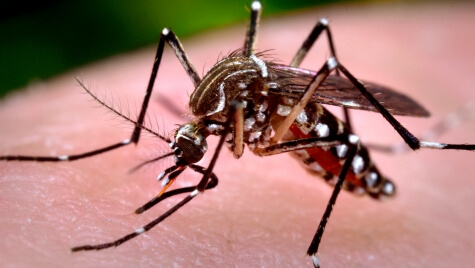 Zika virus is transmitted by a specific mosquito called Aedes aegypti.