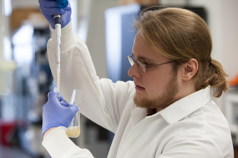 Great Lakes Bioenergy Research Center assistant research specialist Quinn Dickinson picks a colony of a new yeast strain that could reduce the cost of biofuels produced with ionic liquids.
