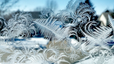 This cellphone photo of ice crystals on a windowpane by botany Professor Marisa Otegui was among the winner's of last year's Cool Science Image Contest.