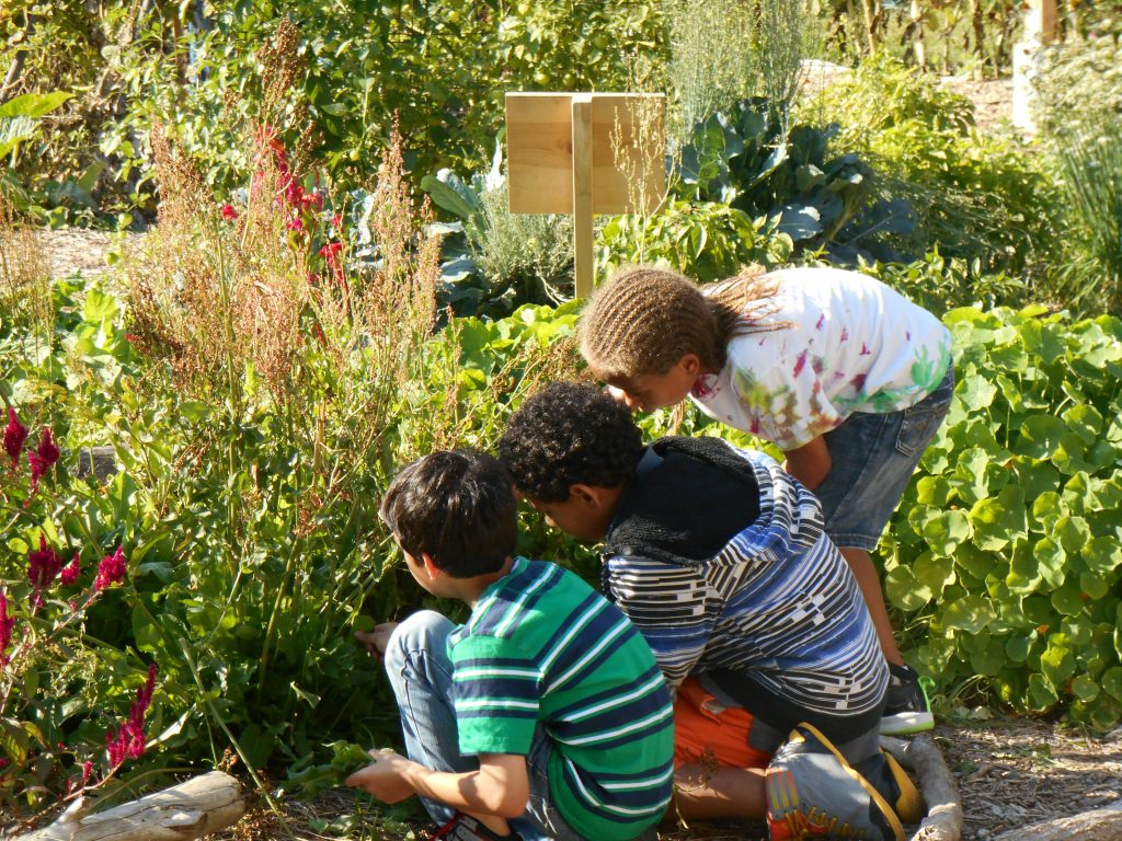Cultivate health initiative helps the school garden for Garden information sites