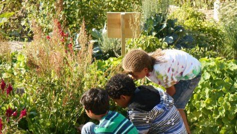 Photo: Students in a school garden