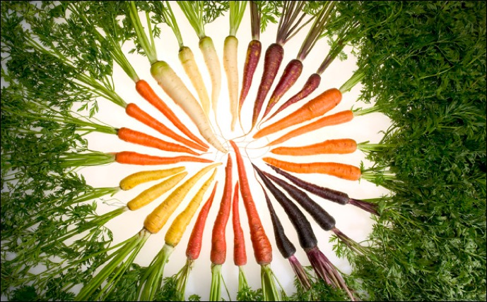 Photo: Different-colored carrots arranged in a circle