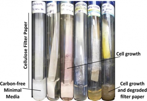 Photo: Test tubes with bacteria growing on filter paper
