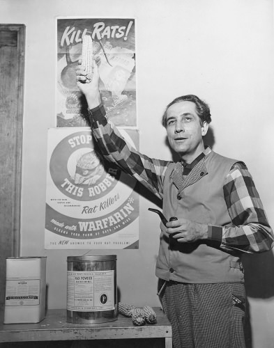 black and white photo of man holding up an object; behind him a poster states 'Kill rats'