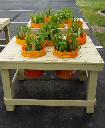 Photo: Plants growing in bucket gardens