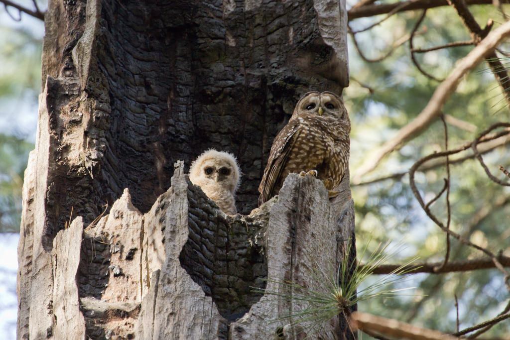 Photo: Owl with owlet in next