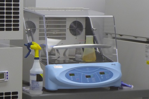 Photo: Bacteria growing in flasks on this shaking incubator provide the raw material for Aldevron's products. After the cells are removed from the incubator, the product is extracted, purified and tested before shipment.