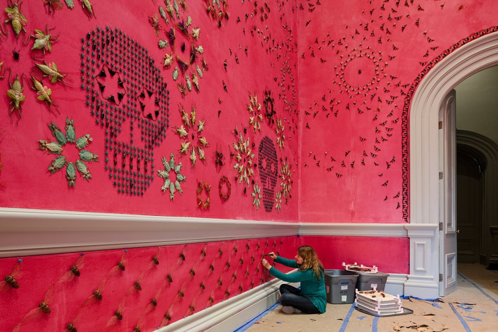Photo: Jennifer Angus with insect installation