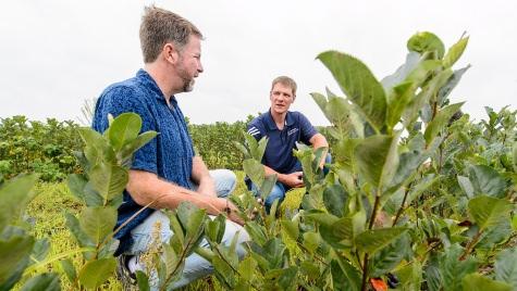 Adam Nemitz (center) and Christian Krueger discuss the aronia crop during a field visit to the JR Nemitz Cranberry Co. near Warrens, Wisconsin, in August.