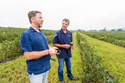 These aronia bushes are too young to produce a useful crop, as Krueger (left) and Nemitz discussing how appearance, taste and nutritional value help aronia break into the market.