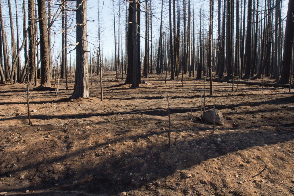 Photo: Burned forest