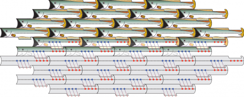 """Simple shapes, such as these fish, can tile large surfaces if their geometry allows for symmetry. The edges eachtessellating fish share with their surroundings are identical from fish to fish. Similarly,assemblies of collagen protein """"tiles"""" can be achieved when the chemical and physical environments of every tile are designed to be identical, allowing scientists to produce synthetic collagen nanofibers."""