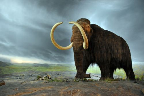 Photo: Woolly mammoth model