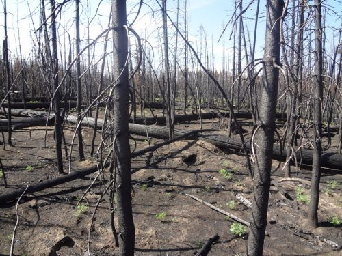 PHOTO: Forest after fire