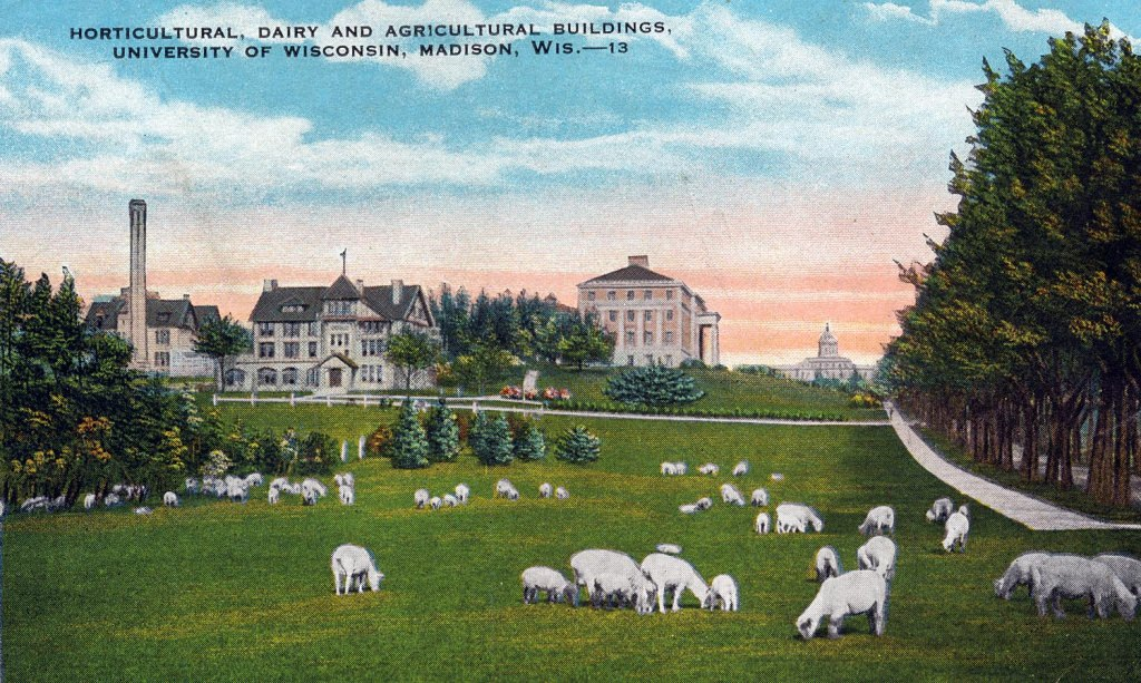 A 1913 postcard shows the agricultural campus, where sheep used to graze. Bascom Hall is visible in the background right.