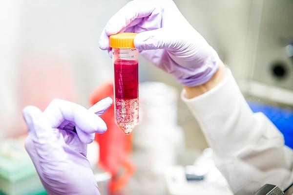 Photo: Gloved hands holding test tube full of liquid