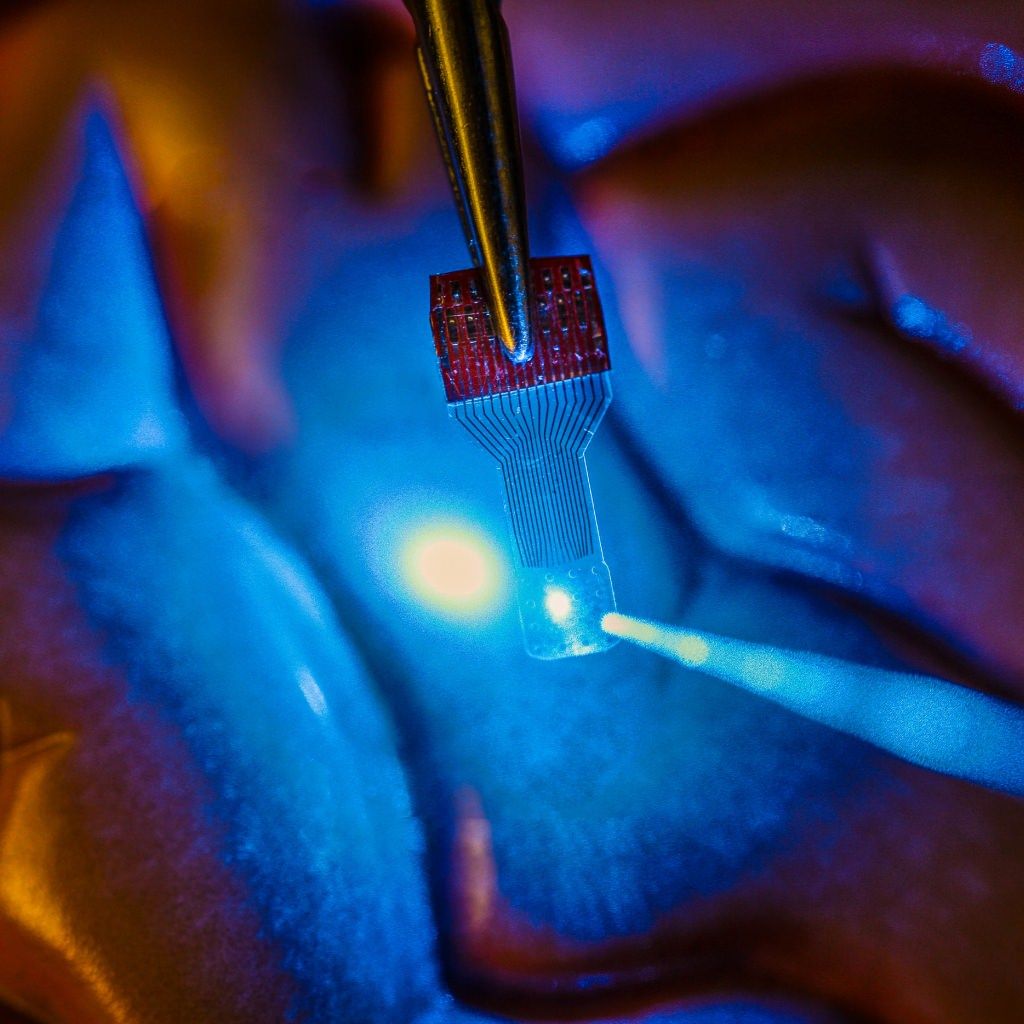 Photo: A blue light shines through a clear, implantable medical sensor onto a brain model. See-through sensors, which have been developed by a team of UW–Madison engineers, should help neural researchers better view brain activity.