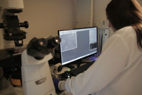 Photo: UW–Madison researchers monitor cancer-killing T-cells using fluorescence microscopy.
