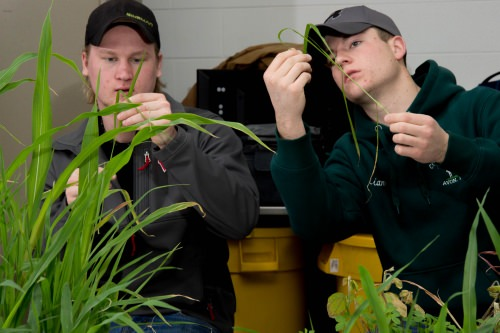 Students get up close and personal with local weeds during a lab at the Farm and Industry Short Course.