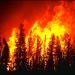 Photo: Yellowstone Fires