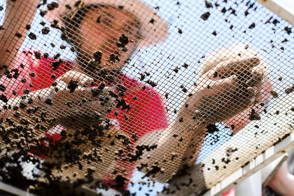 Photo: Student sifting through dirt