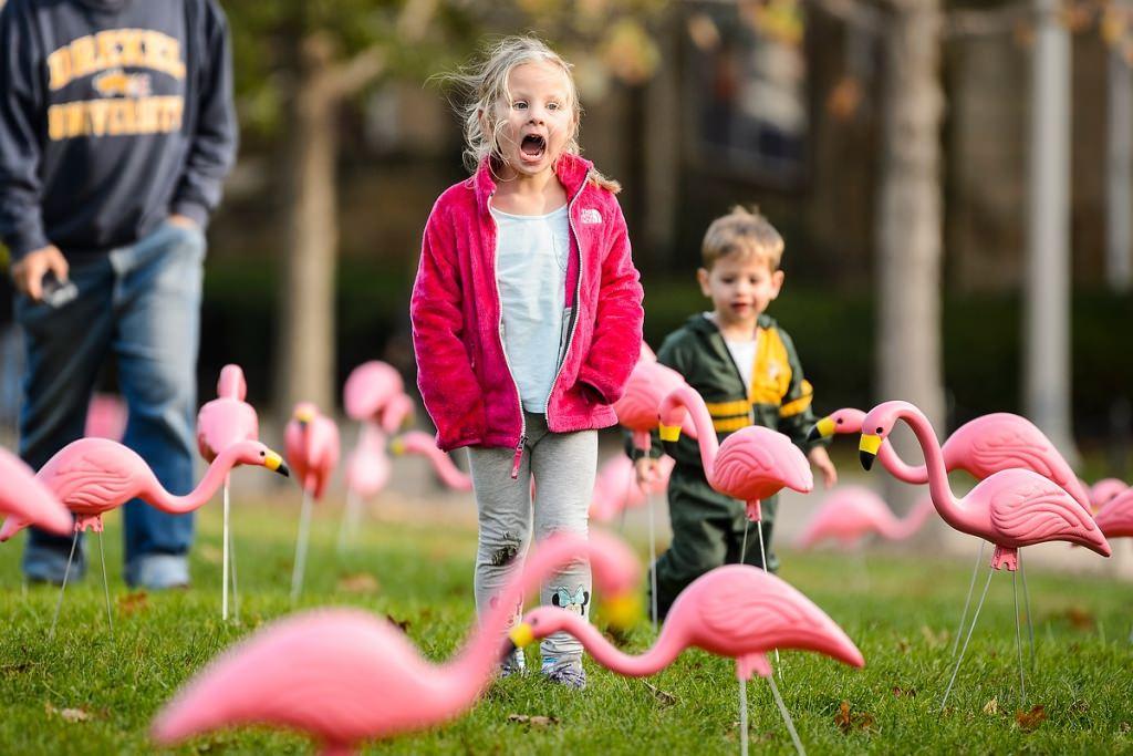 Photo: Child looking at flamingos