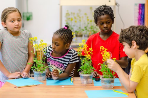 Students at Hawthorne Elementary School in Madison work with plants that grow fast enough to captivate their attention and allow a range of new classroom experiments.