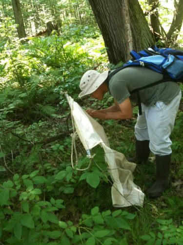 UW-Madison graduate student Xia Lee hunts for ticks.