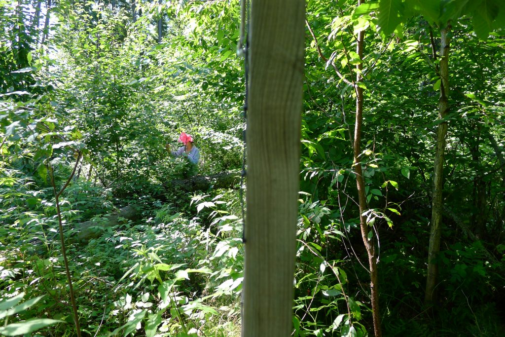 Photo: Forest on both sides of deer exclosure