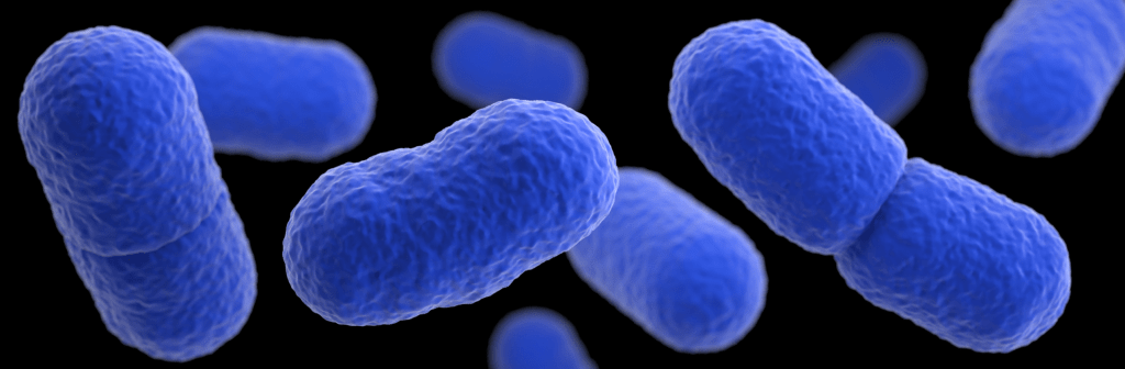 Image: Listeria monocytogenes