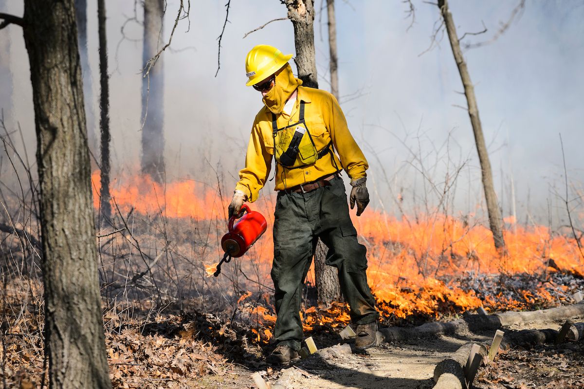 UW Arboretum land care staff member Austin Pethan uses a drip torch as a ten-person staff manages a prescribed fire  at the Arboretum in spring 2016. Prescribed burns are scheduled for this week as well.