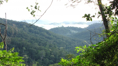 The four-square-mile as RPPN Feliciano Miguel Abdala study forest is seen.