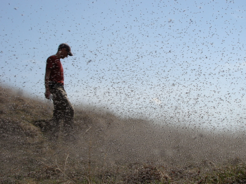 Photo: Claudio Gratton in a swarm of midges