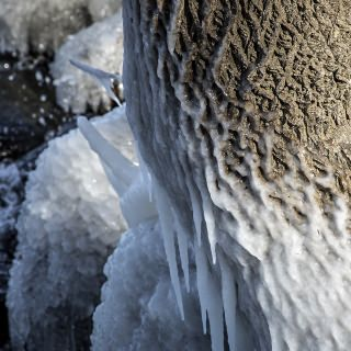 A tree trunk, whipped by wind and water, is glazed with ice.