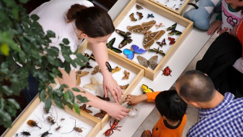 During the Science Expedition event in 2011, Children learn about creeping, crawling and flying bugs and insects at a hands-on exploration station organized by the Department of Entomology's Insect Ambassadors. This year's Science Expeditions will be this coming weekend.