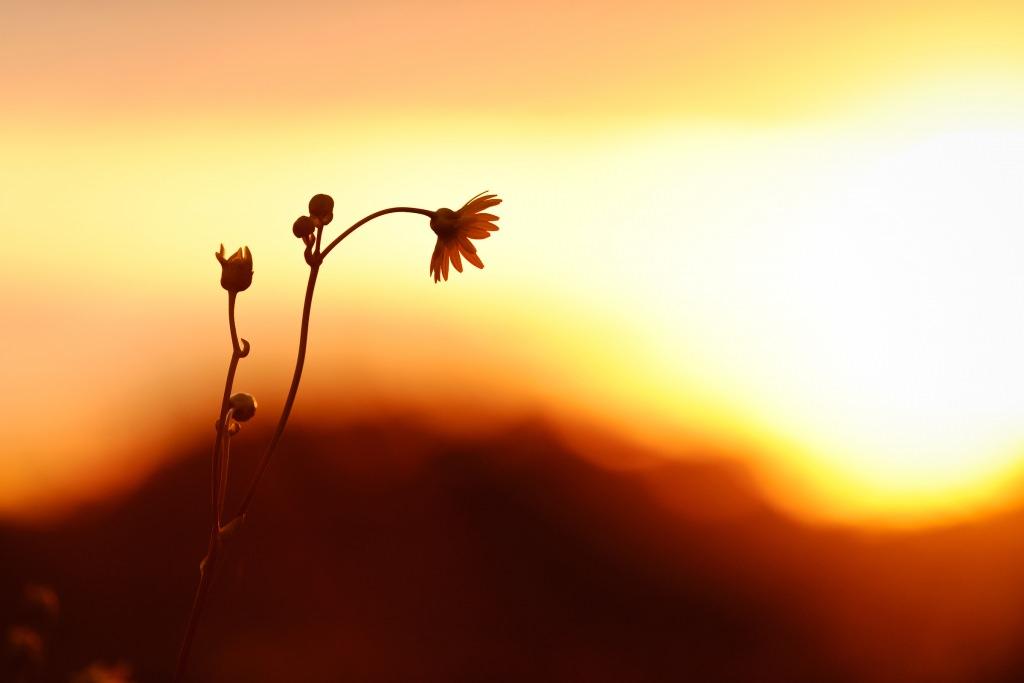 Photo: Flowers in UW Arboretum prairie
