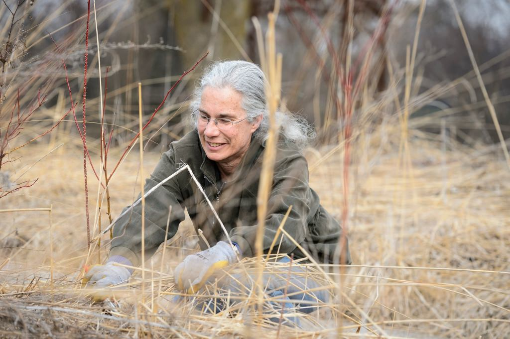 Robert and Carroll Heideman Award for Excellence in Public Service and Outreach Susan Carpenter, a senior outreach specialist, takes a break from pruning plants and brush in the native prairie garden at the University of Wisconsin–Madison Arboretum during early spring on March 24, 2017.