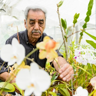 """Chancellor's Award for Excellence in Service to the University: Mo Fayyaz, distinguished director, Greenhouses and Botanical Garden, Botany Department. For more than three decades, Mo Fayyaz has efficiently and expertly run the UW Botany Greenhouses and Botanical Garden, a large enterprise that provides indispensable support to the Botany Department's teaching and research missions. The campus facilities also serve as a vital outreach tool. Fayyaz has excelled at opening the greenhouses and garden to the entire state, from school groups and businesses to the general public. He exemplifies the Wisconsin Idea. A defining moment illustrating his public relations genius came in June of 2001, when he set up a 24/7 webcam to monitor the blooming of the foul-smelling titan arum. The huge """"corpse flower"""" captivated much of the country, drawing 30,000 visitors to the campus over three days and breaking a university record for the greatest number of website hits."""