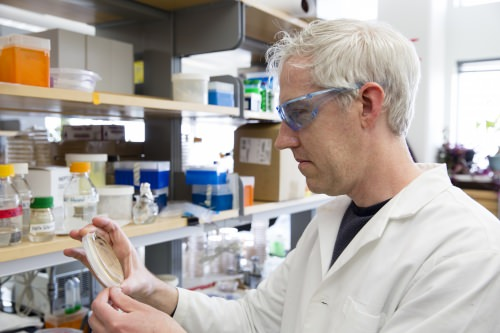 Dan Yelle, , a research forest products technologist with the U.S. Department of Agriculture's Forest Products Laboratory, in the laboratory.