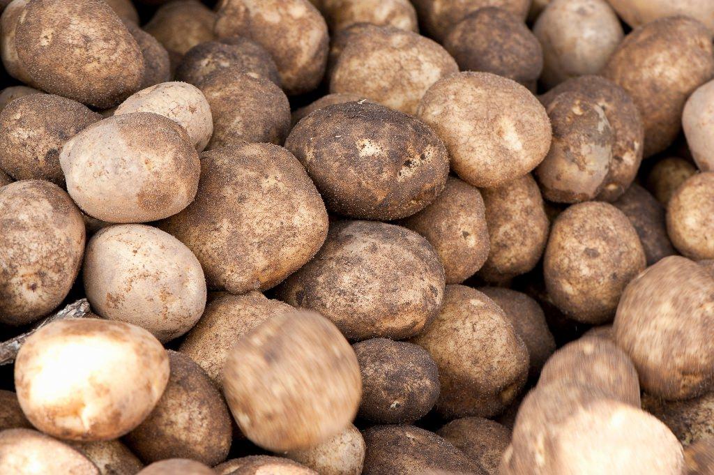 Photo: Potatoes on conveyor belt