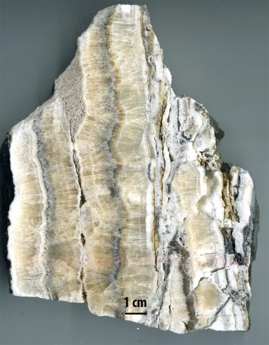 Photo: A polished slab of rock from the Loma Blanca fault